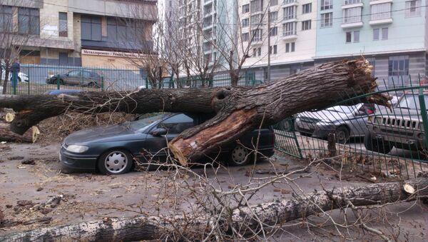 Ураган в Москве - Sputnik Узбекистан