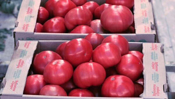 Собранный урожай помидоров - Sputnik Ўзбекистон