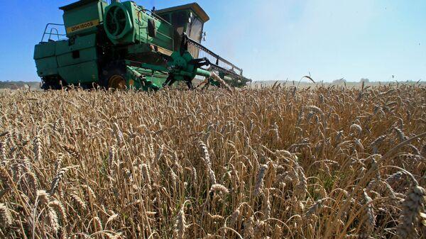 Уборка урожая зерновых на полях - Sputnik Ўзбекистон