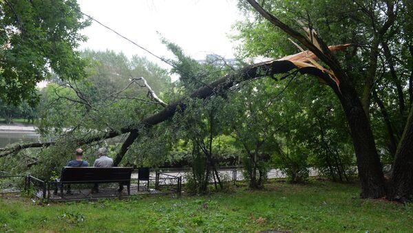 Последствия урагана в Москве - Sputnik Узбекистан