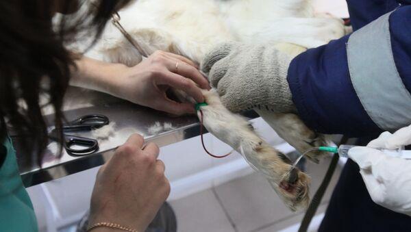 Работа приюта для безнадзорных животных в Руднево - Sputnik Узбекистан