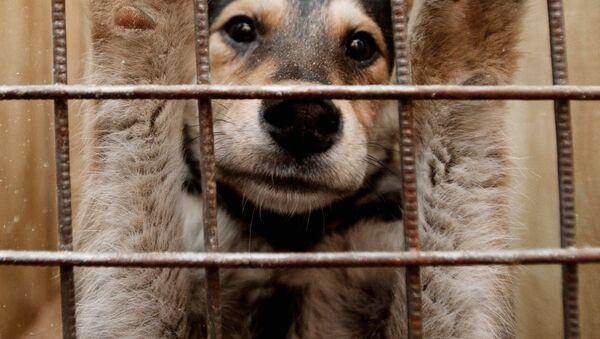 Собака в вольере пункта кратковременного содержания бездомных животных - Sputnik Ўзбекистон