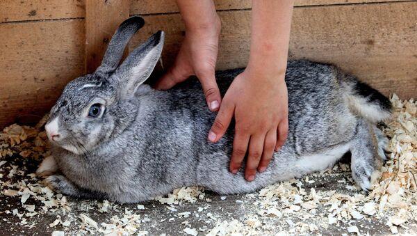 Кролик - Sputnik Узбекистан
