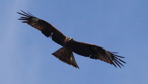 Орел – священная птиц Алханая, ведь он вестник богов - Sputnik Ўзбекистон