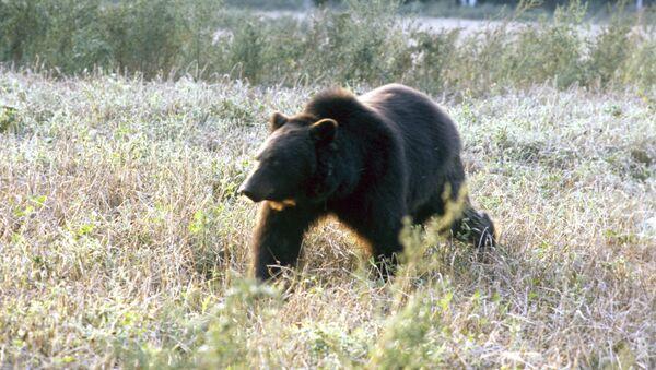 Burыy medved - Sputnik Oʻzbekiston