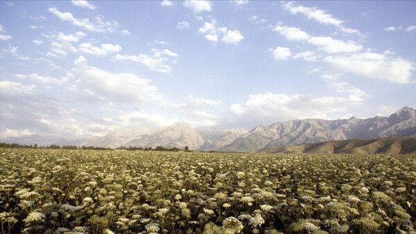 Ферганская долина в Узбекистане - Sputnik Узбекистан