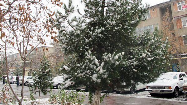 Зима в Ташкенте - Sputnik Ўзбекистон