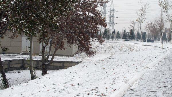 Зима в Ташкенте - Sputnik Узбекистан
