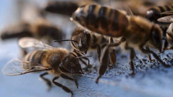 Пчелы - Sputnik Узбекистан