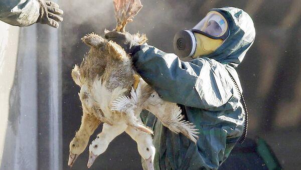 Мужчина держит уток, зараженных вирусом птичьего гриппа - Sputnik Ўзбекистон