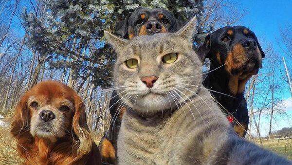 Селфи кота покорило интернет - Sputnik Узбекистан