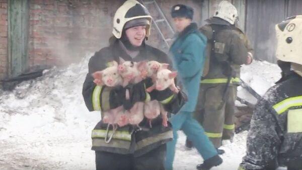 Пожарный несет спасенных из огня поросят - Sputnik Узбекистан