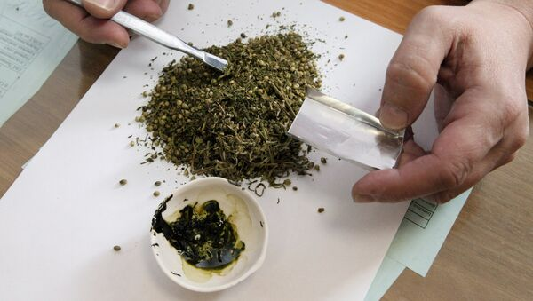 Специалист экспертно-криминалистического центра исследует марихуану - Sputnik Узбекистан
