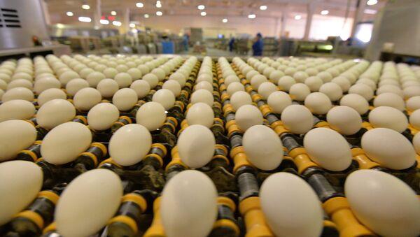 Куриные яйца на птицефабрике - Sputnik Ўзбекистон