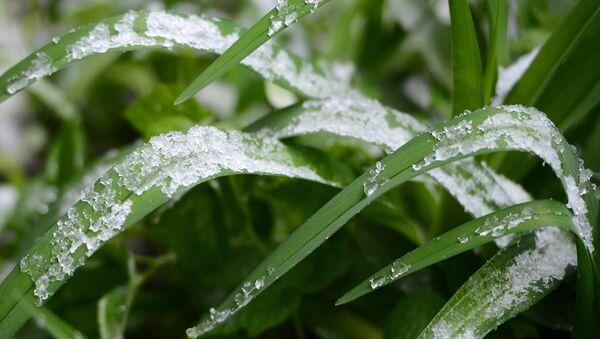 Sneg na trave. Arxivnoye foto - Sputnik Oʻzbekiston