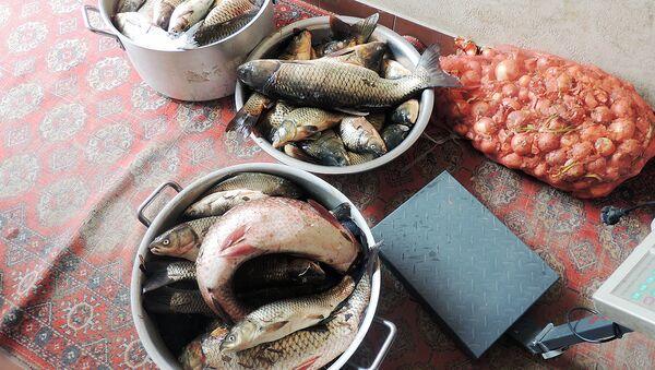 Рыба, изъятая у браконьеров в ходе рейда инспекторами госкомприроды  - Sputnik Ўзбекистон