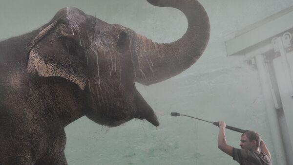 Слон в помещении для мытья - Sputnik Узбекистан