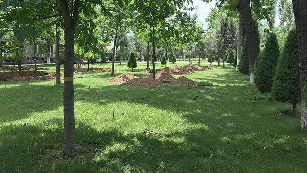 Выкорчевывание деревьев в парке - Sputnik Ўзбекистон