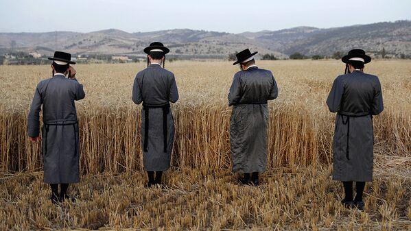 Ультраортодоксальные евреи молятся над пшеницей в поле возле поселения Мево-Хорон - Sputnik Узбекистан