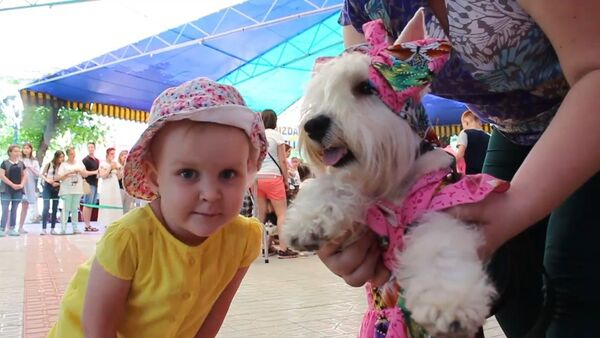 Sobaka-pirat i Krasnaya shapochka, ili Dog-shou po-tashkentski - Sputnik Oʻzbekiston