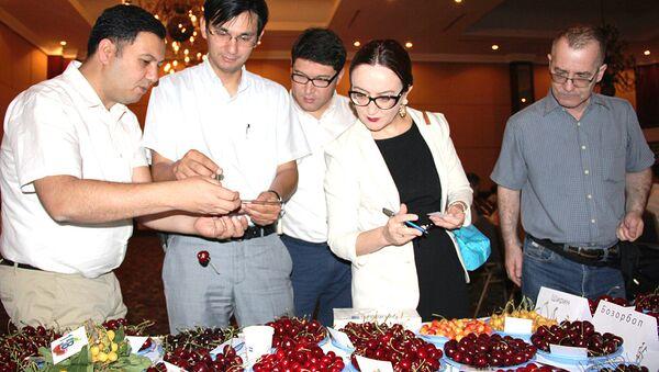 Yejegodnыy konkurs chereshni v Uzbekistane - Sputnik Oʻzbekiston