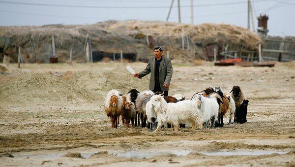 A man near the Aral Sea - Sputnik Oʻzbekiston