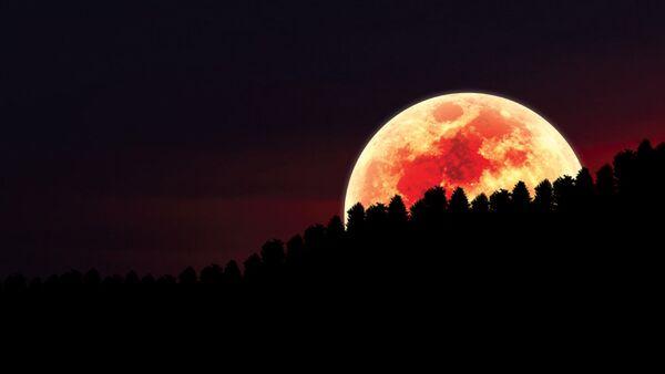 Луна суперлуние ночь лес - Sputnik Узбекистан