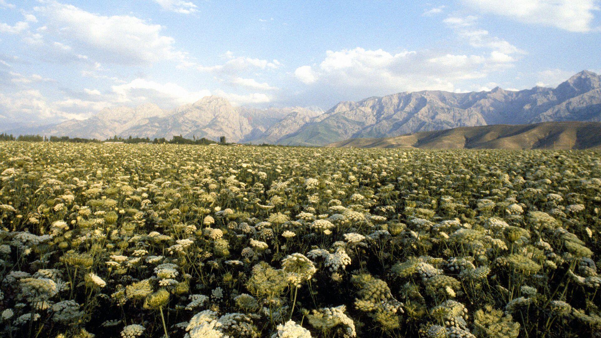 Ферганская долина в Узбекистан - Sputnik Узбекистан, 1920, 17.09.2021