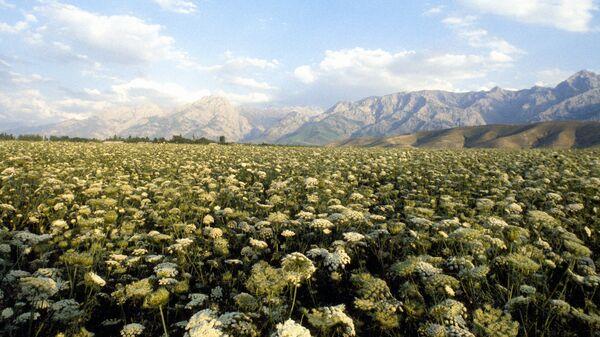 Ферганская долина в Узбекистан - Sputnik Ўзбекистон