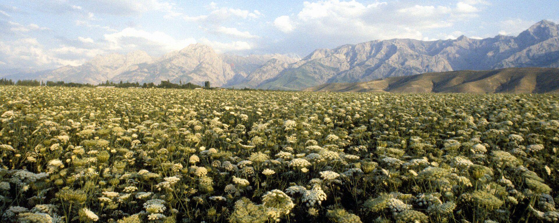 Ферганская долина в Узбекистан - Sputnik Ўзбекистон, 1920, 18.09.2021