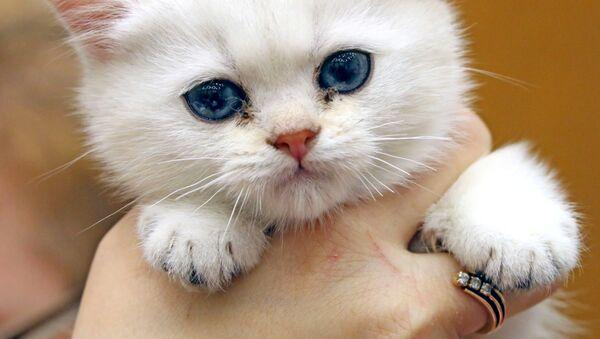 Котенок в руках - Sputnik Ўзбекистон
