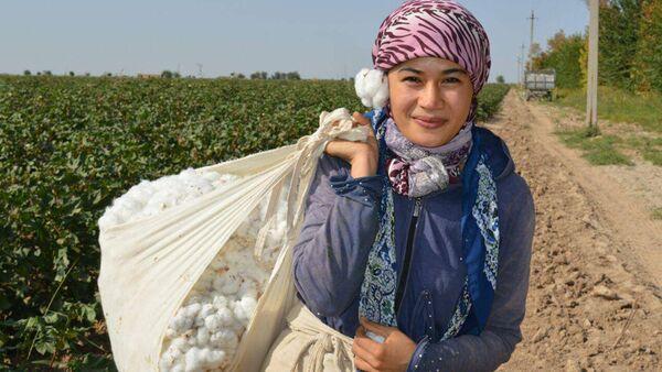 Девушка на сборе хлопка - Sputnik Узбекистан
