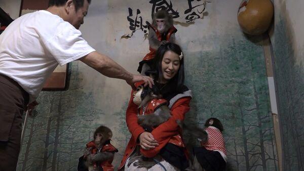 СПУТНИК_Официанты-макаки развлекают гостей в одном из японских баров - Sputnik Узбекистан