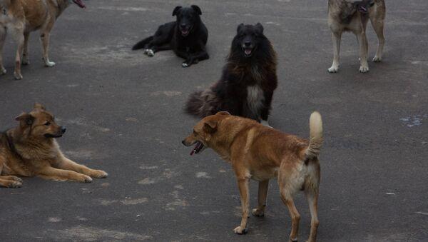 Приют для бездомных животных в Москве - Sputnik Узбекистан
