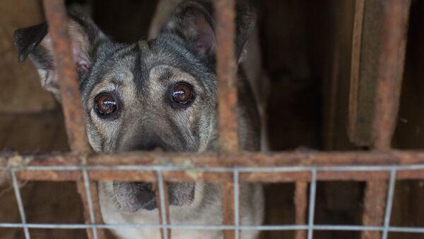 Приют для бездомных животных - Sputnik Узбекистан
