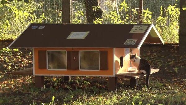 СПУТНИК_Рижанин построил 80 домиков для бездомных кошек - Sputnik Узбекистан