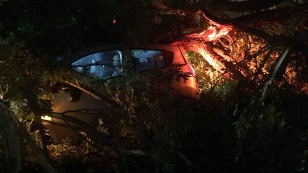 Деревья повалились на машины в Ташкенте - Sputnik Ўзбекистон