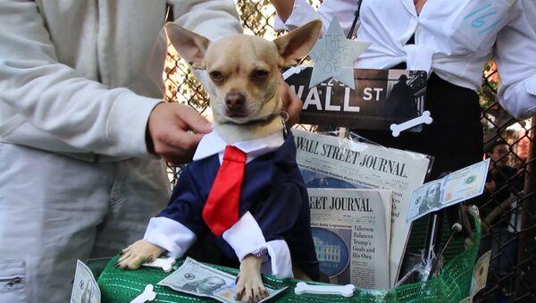 Собачий Хеллоуин в Нью-Йорке - Sputnik Узбекистан