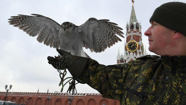 Ястреб Соколиной службы комендатуры Московского Кремля - Sputnik Узбекистан