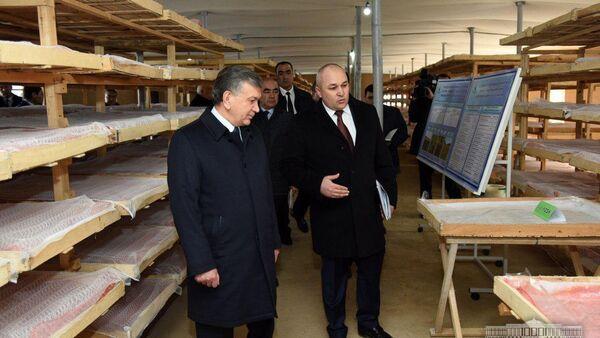 Президент Шавкат Мирзиёев ознакомился с деятельностью гренарни при СП «Inter Silk Pro» Термезского района - Sputnik Ўзбекистон