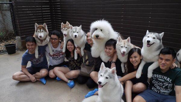 СПУТНИК_Кафе с собаками в Бангкоке - Sputnik Узбекистан