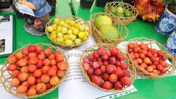 Фрукты, представленные на сельскохозяйственной выставке - Sputnik Узбекистан
