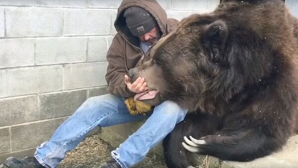 Мужчина пытается приободрить огромного медведя после трудного рабочего дня - Sputnik Ўзбекистон
