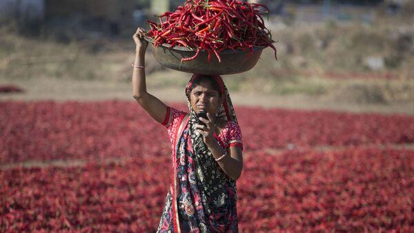 Индианка смотрит на экран своего мобильного телефона во время сбора урожая красного перца в Гандинагаре, Индия - Sputnik Ўзбекистон