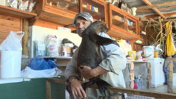 Уругваец стал мамой для двух осиротевших тюленей - Sputnik Узбекистан