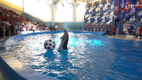 СПУТНИК_Футбольное шоу в дельфинарии - Sputnik Узбекистан