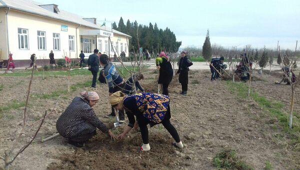 Во всенародном хашаре приняли участие учителя и ученики школ - Sputnik Ўзбекистон