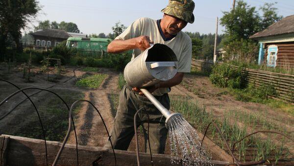 Мужчина поливает грядку у себя в огороде в деревне Окунево, где проходит этнографический фестиваль Солнцестояние. - Sputnik Ўзбекистон