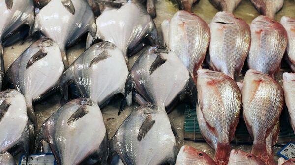 Прилавок с рыбой - Sputnik Узбекистан