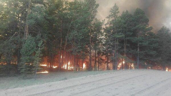 Лесной пожар в Семее - Sputnik Узбекистан